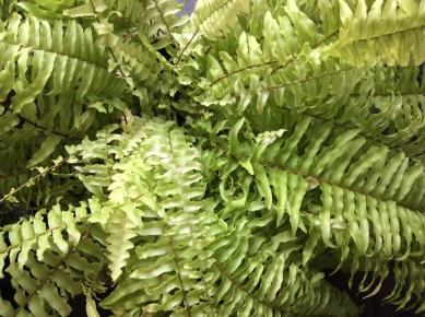 flower&green Lagurus (4)